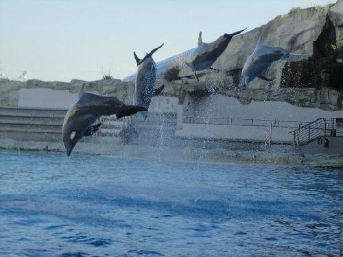 Дельфинарий Ольтремаре в Римини