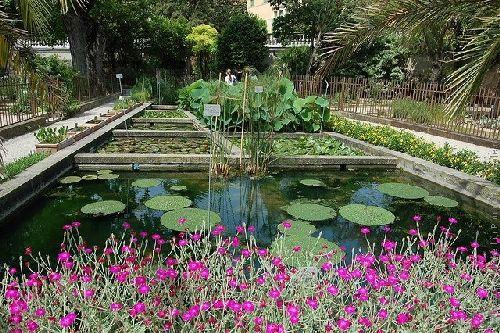 Ботанический сад в Падуе  - самый старый в мире