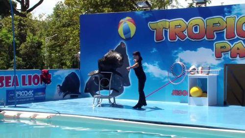 Парк развлечений Tropicarium - одно из любимейших мест отдыхающих в Лидо ди Езоло